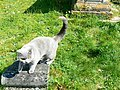 Friendly young cat, St Peter's church, Freshford - geograph.org.uk - 422284.jpg