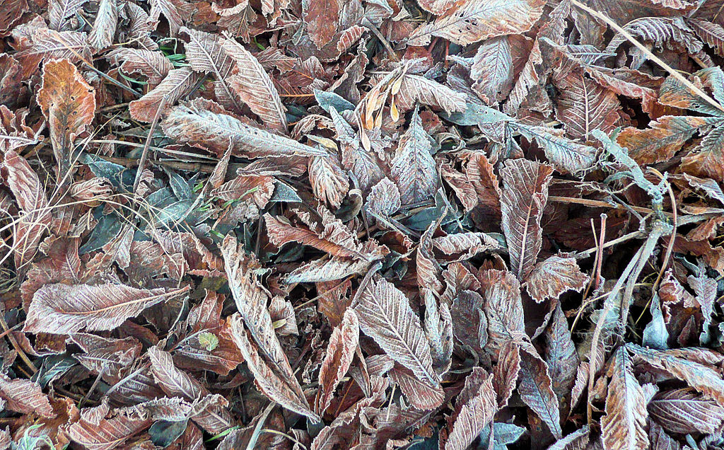 http://upload.wikimedia.org/wikipedia/commons/thumb/6/6f/Frost_on_fallen_leaves.jpg/1024px-Frost_on_fallen_leaves.jpg