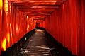 Fushimi Inari4.JPG