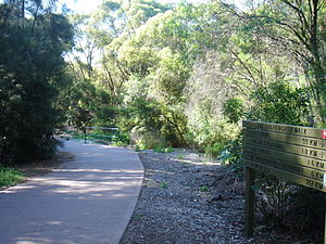 Great North Walk - The Great North Walk at Pennant Hills