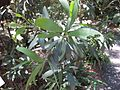 Gardenology.org-IMG 0574 rbgs10dec.jpg
