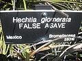 Gardenology.org-IMG 2225 hunt0903.jpg