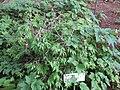 Gardenology.org-IMG 2312 rbgs11jan.jpg