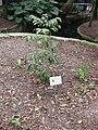 Gardenology.org-IMG 2608 rbgs11jan.jpg