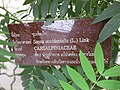 Gardenology.org-IMG 7976 qsbg11mar.jpg