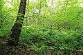 Geschützter Landschaftsbestandteil Schubertgrund in Sachsen. 2H1A0976WI.jpg