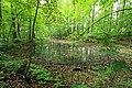 Geschützter Landschaftsbestandteil Schubertgrund in Sachsen. 2H1A1062WI.jpg