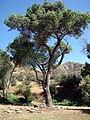 Gillman Ranch, Landscape 5-2012 (7414687222).jpg