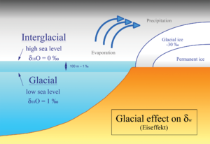 Nicholas Shackleton - The Glacial effect describes the change of the oxygen isotope composition of sea water, due to growing ice sheets in high latitudes during glacials.