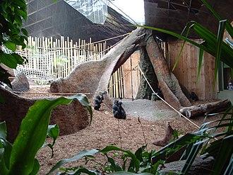 Toronto Zoo - The Gorilla Rainforest exhibit