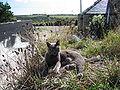 Grace(cat)4.jpg