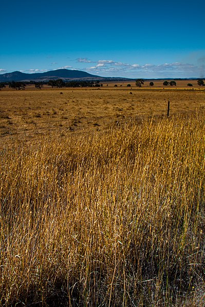 File:Grampians National Park (37112340224).jpg
