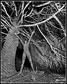 Gravüür valgusega X.jpg