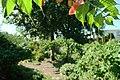 Green garden (6147739378).jpg