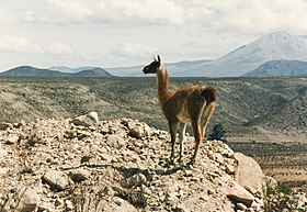 Image illustrative de l'article Parc national Lauca