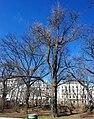 GuentherZ Naturdenkmal 569 2010-02-27 0153 Wien01 Stadtpark Ginkgo.jpg