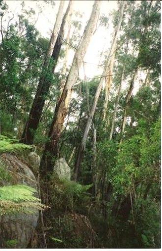 Mount Gulaga - Image: Gulaga Eucalyptus fraxinoides & syenite
