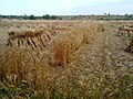 HAYAL MUGHLAN - panoramio (13).jpg