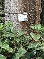 HK 香港公園 Hong Kong Park 植物 樹木 plant tree green leaves December 2020 SS2 03.jpg