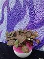 HK Sheung Wan 太平山街 22-24 Tai Ping Shan Street 太平樓 Tai Ping Building shop Craftissimo wall graffiti purple n plant Aug 2016 DSC.jpg