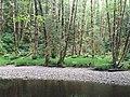 Haans Creek - Haida Gwaii (27265825275).jpg