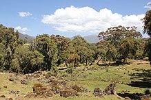 Wikipedia:WikiProject Ethiopia/Articles - WikiVisually