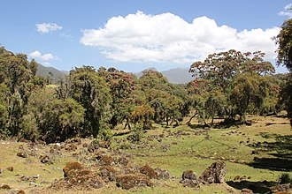 Bale Mountains National Park - Harenna Forest landscape in the park.