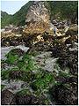 Harris Beach SP.jpg