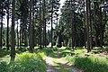 Harzwanderung Oberharz um Braunlage - Wurmberg - An und um die Scherstorklippe - panoramio.jpg