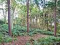 Heber's Ghyll woods - geograph.org.uk - 60782.jpg