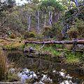Hepburn Regional Park.jpg