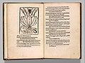 Herbarium MET DP357300.jpg