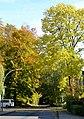 Herbstfarben am Burgberg - panoramio (1).jpg