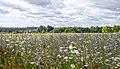 Hesbanian Summerlandscape (35311417554).jpg