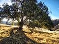 Hiking Towsley Canyon (11675272916).jpg
