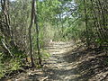 Hiking trail at Castroville, TX Regional Park IMG 3271.JPG