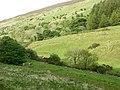 Hillside beside A494 - geograph.org.uk - 449632.jpg
