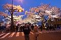Hitachi Sakura Festival, Ibaraki 18.jpg