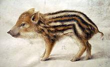 wild boar wikipedia