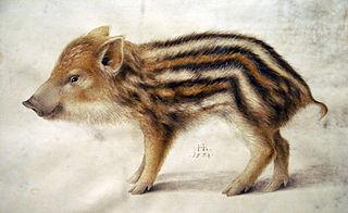 A Wild Boar Piglet