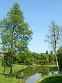 Hop Garden Pond, Gatton Park - geograph.org.uk - 1319835.jpg