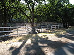 Horse Boarding Alamo CA.jpg