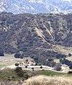 Horse Ranch, Live Oak Canyon, Redlands, 1-2012 (6831716671).jpg