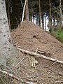 Huge wood ant nest - geograph.org.uk - 39372.jpg