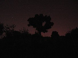 IMG 0492 - a tree at night, experiment.jpg