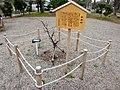Ieyasubai (Prunus mume) - 1.jpg