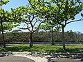 Iguape - SP - panoramio (175).jpg