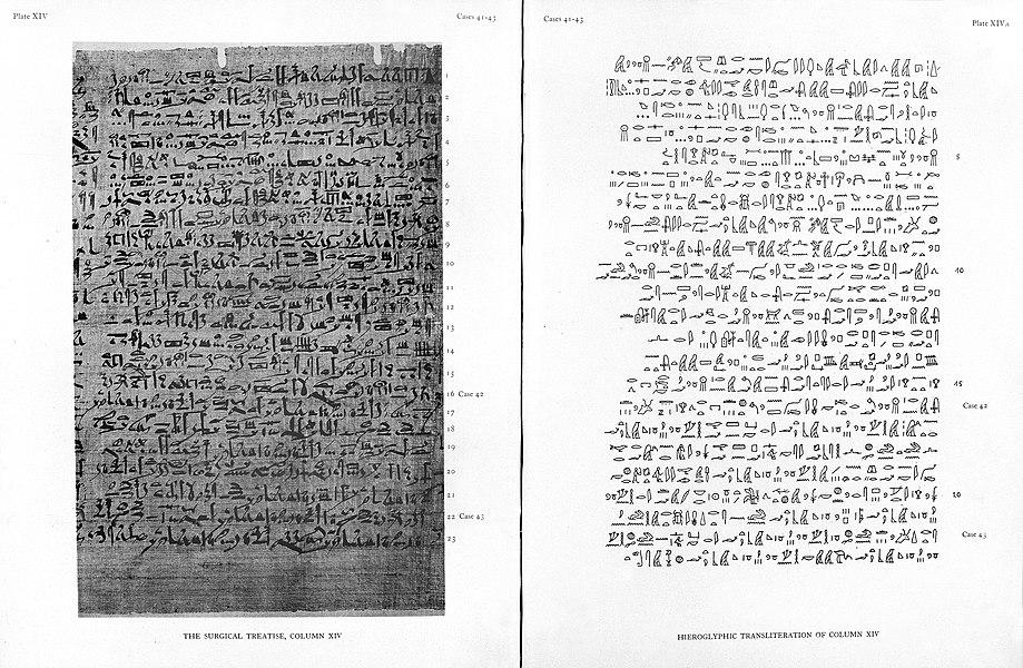 papyrus - image 2