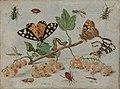 Insecten en vruchten Rijksmuseum SK-A-793.jpeg