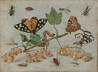 Insects and Fruit